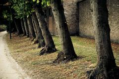 Árboles en línea