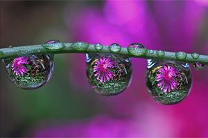 drops in drops por Steve Wall