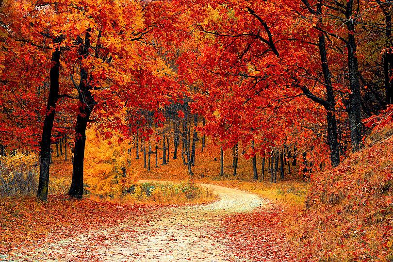 Los bosques nos dan más de lo que pensamos: Siempre dan más.