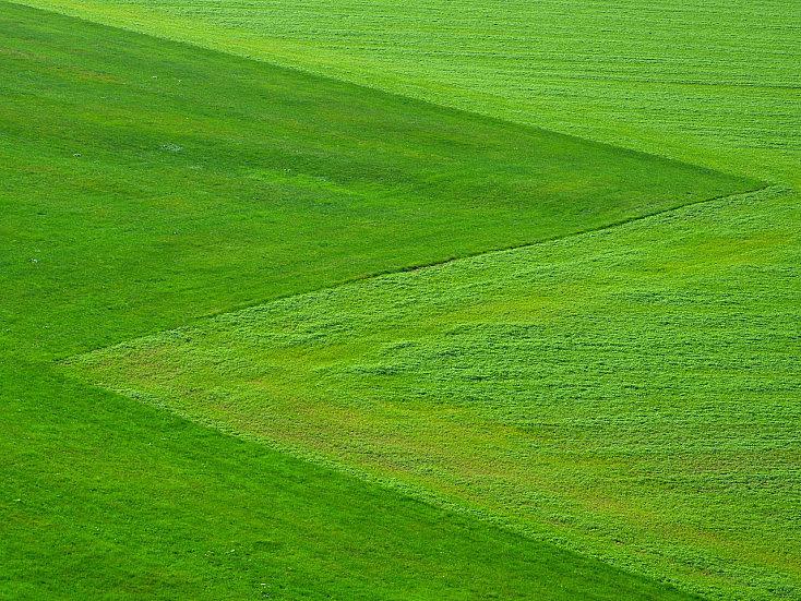 meadow-196567_1280