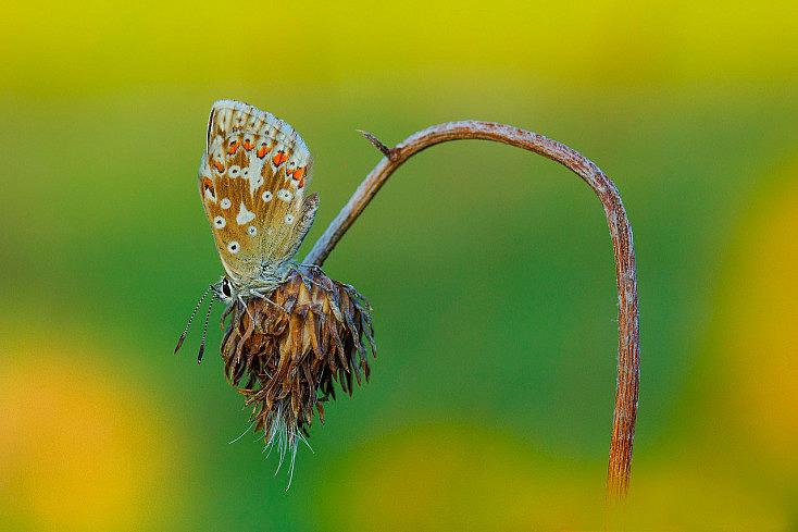butterfly-1643510_1280