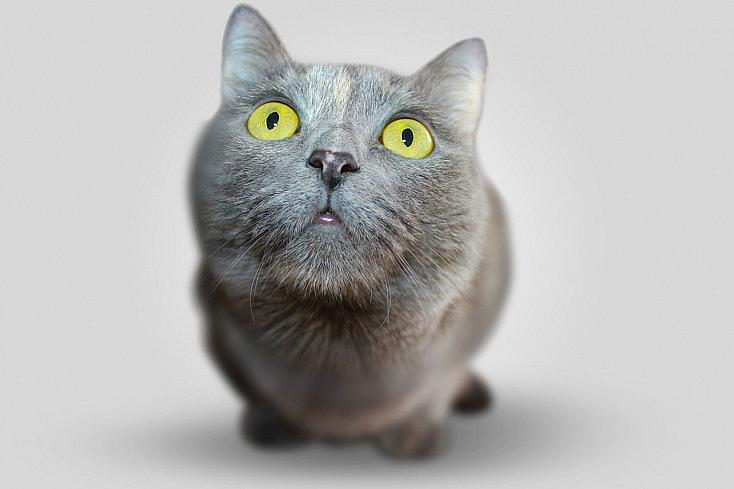 cat-351926_1280 (1)