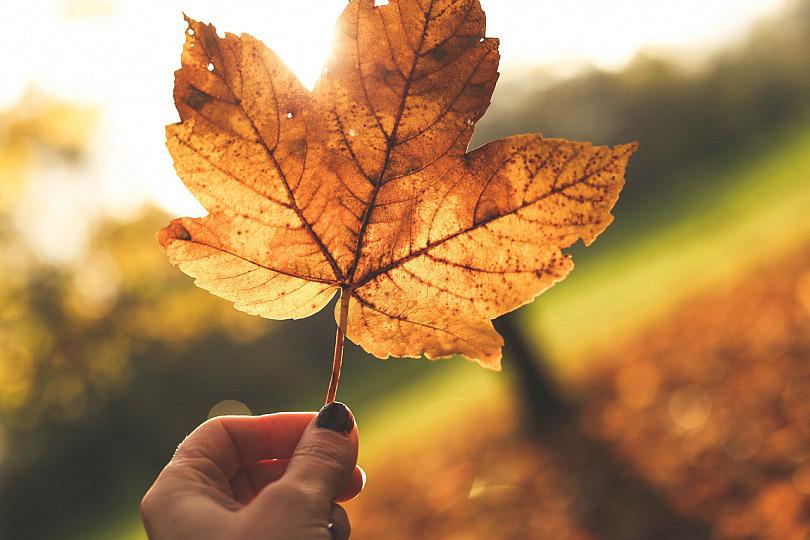 Resultado de imagen para fotos en otoño