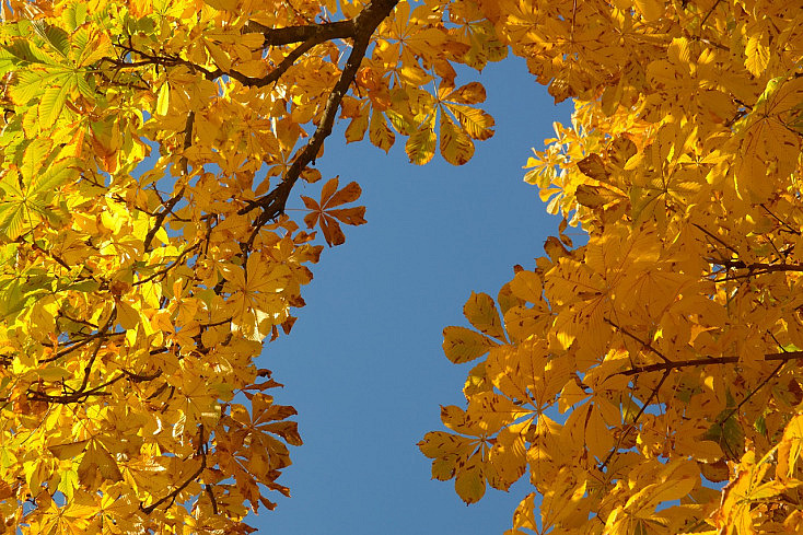 chestnut-leaves-228072_1280