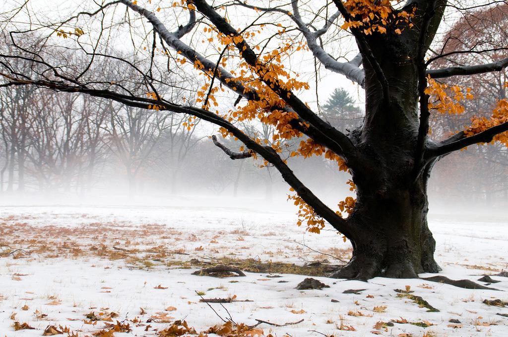 14 Fotos para Descongelar tu Inspiración a Temperaturas Bajo Cero