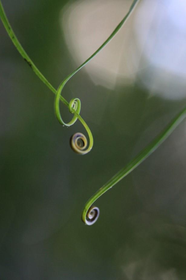 espiral (5)