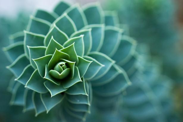 espiral (7)