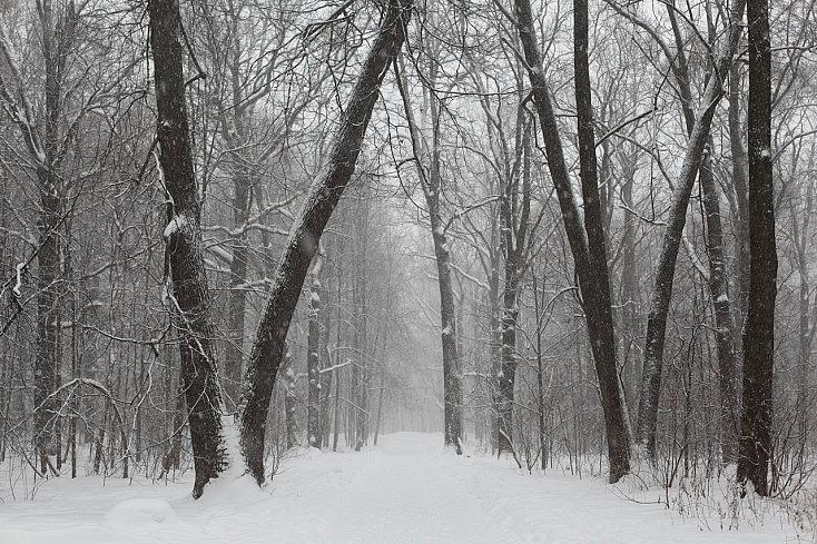 nieve-arboles-nublado