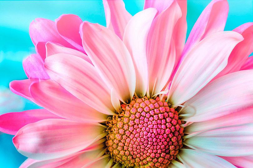 Resultado de imagen de postales de florecillas