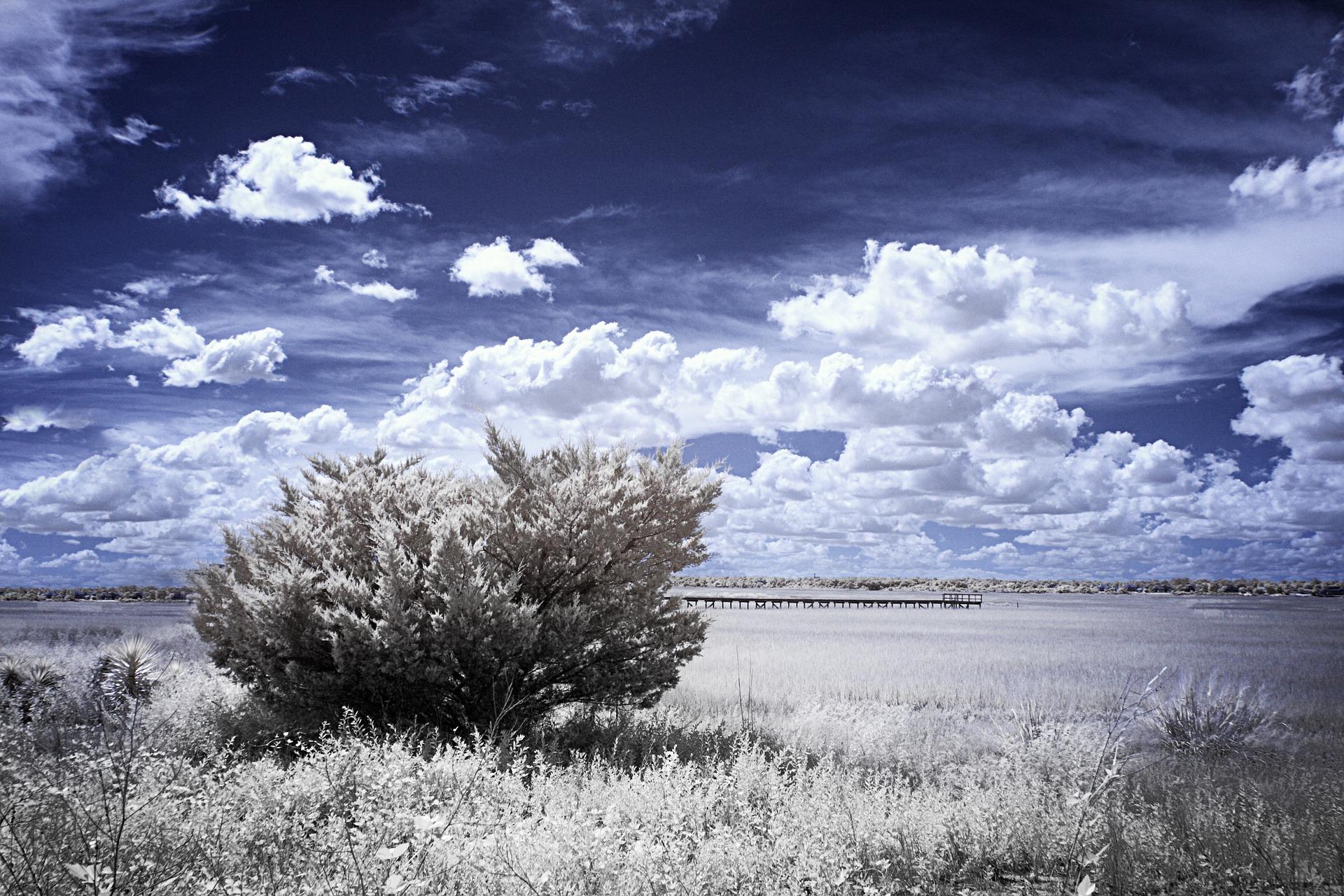 fotografia-infrarroja.jpg