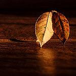leaf-409258_1280