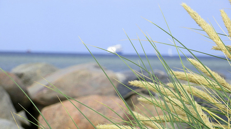 grass-435762_1280