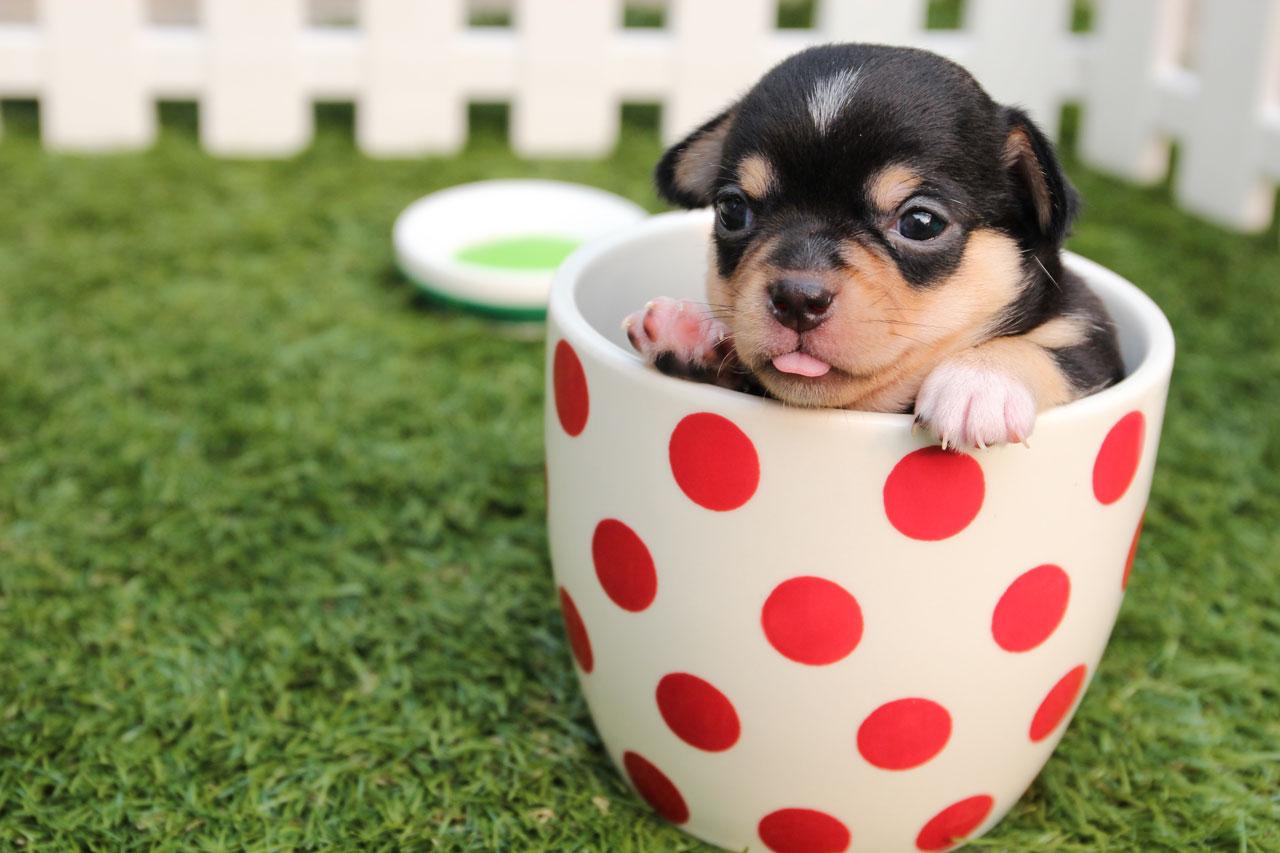 14 Estupendos Consejos para Hacer Fotos a Mascotas