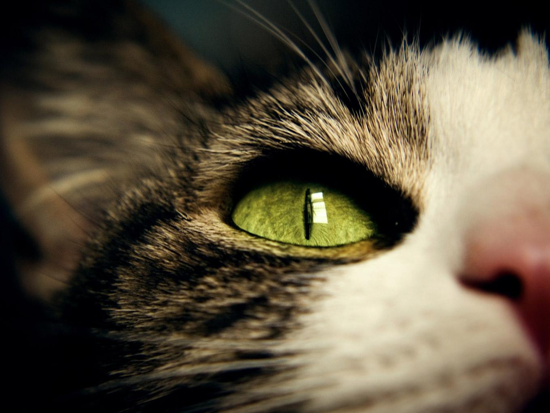 10 Estupendos Consejos para Hacer Fotos a Mascotas
