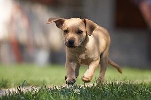 My little dog por -=RoBeE=-