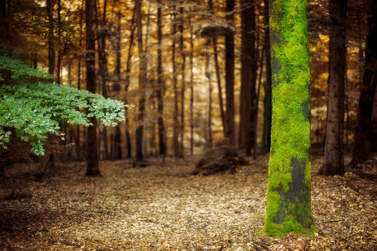 25 fotos de bosques para que desempolves la c mara - Fotos en la pared ...