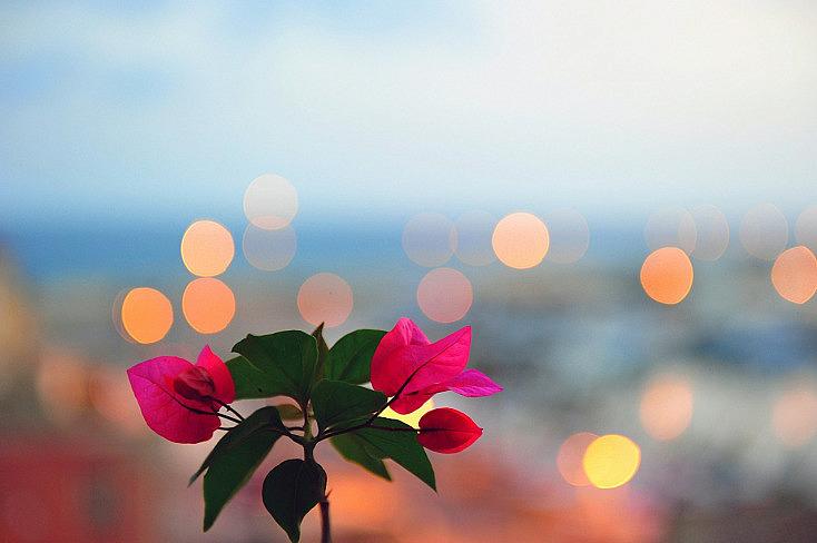 flower-569287_1280