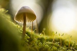 nature-768563_1280