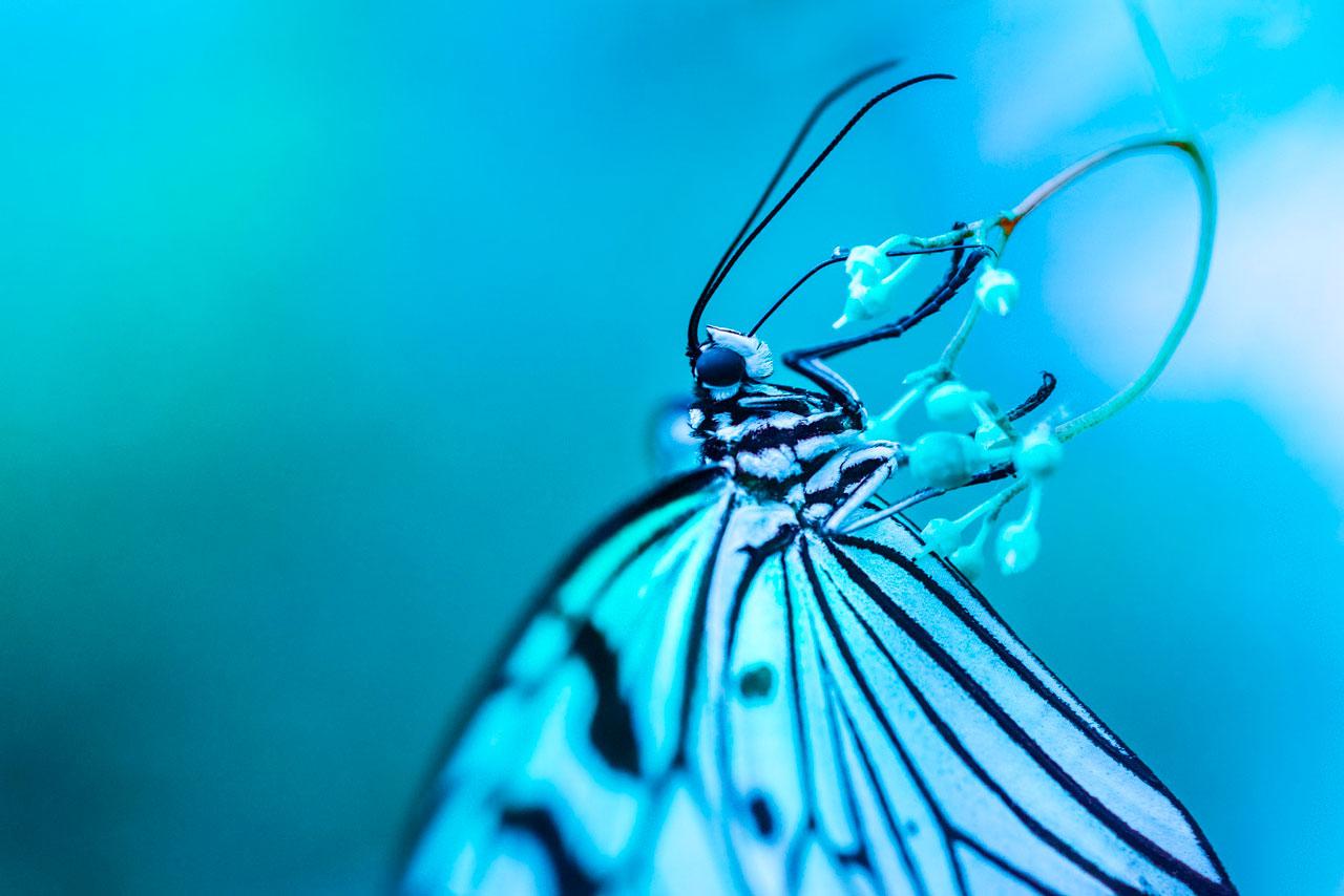 mariposa-azul-macro-guia-portada.jpg