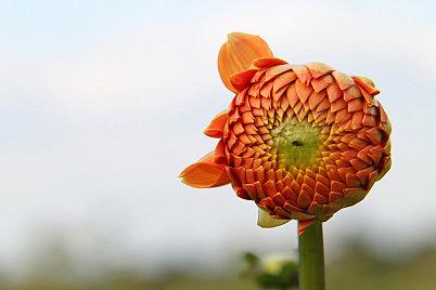 flower-82379_1280