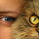 cat-757843_1280