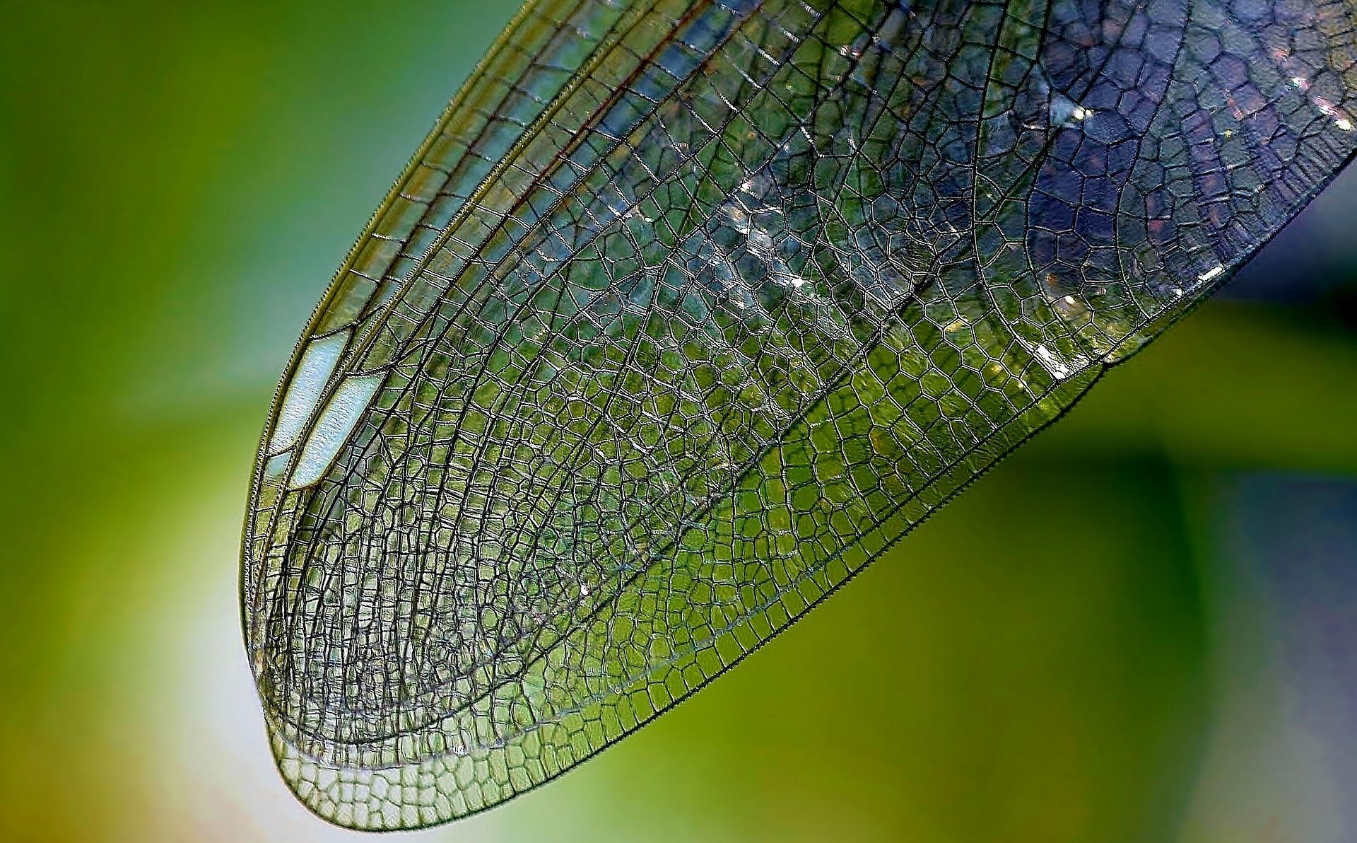 Las Texturas en Fotografía y Cómo Sacarles Jugo