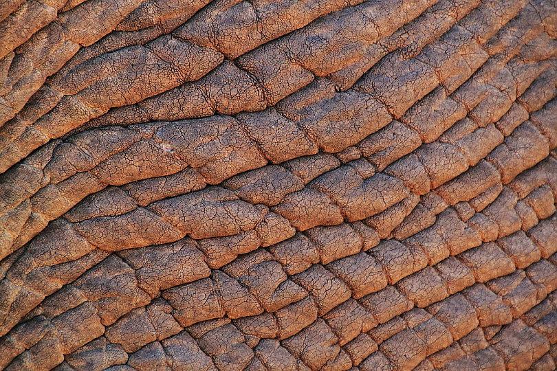 elephant-skin-245071_1280