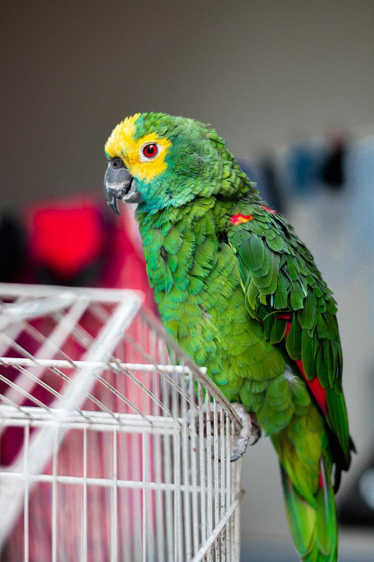 fotos-mascotas-inspiracion-animal-animal