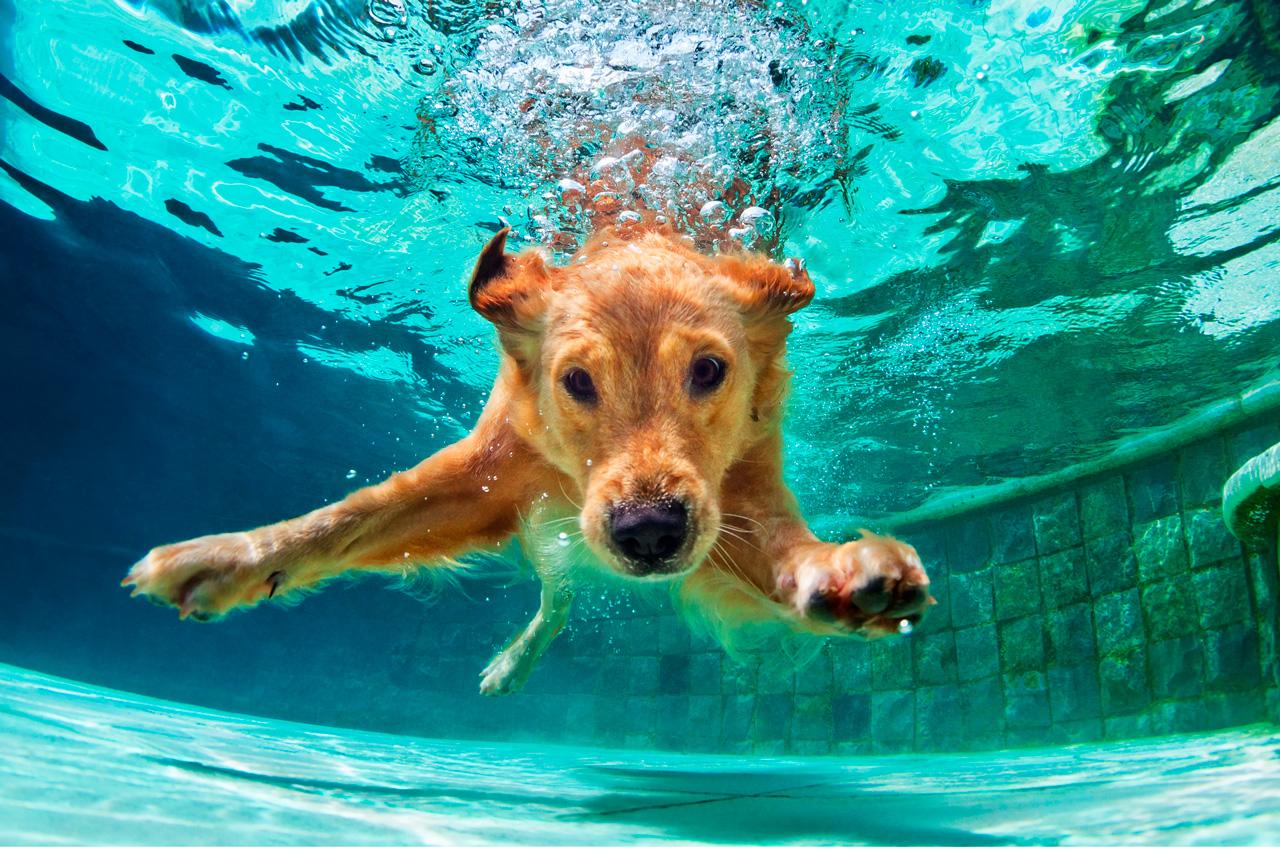 22 Fotos de Mascotas para Encontrar la Inspiración
