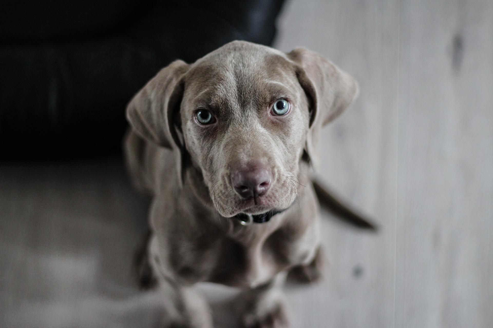 11 Ideas y Consejos para Hacer Mejores Fotos de Animales