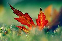 wpid-fotografia-hojas.jpg