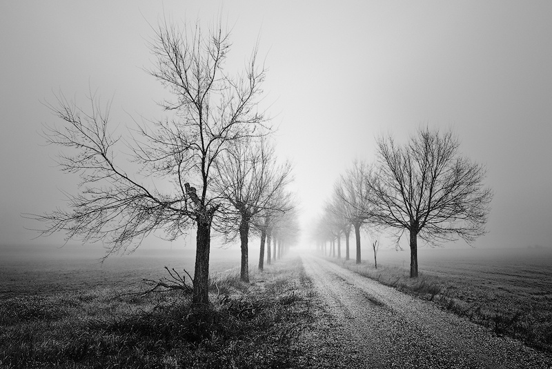 Afbeeldingsresultaat voor Paseantes bajo la niebla