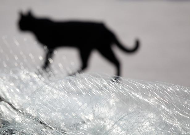 615px gato