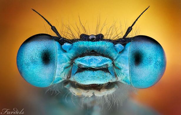 cab-azul