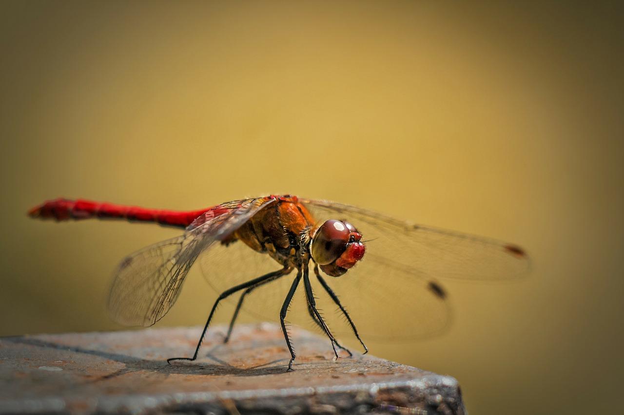 Cómo Fotografiar Insectos: Descubre Todos Sus Secretos