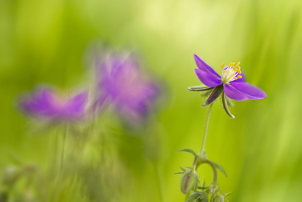flor y desenfoque