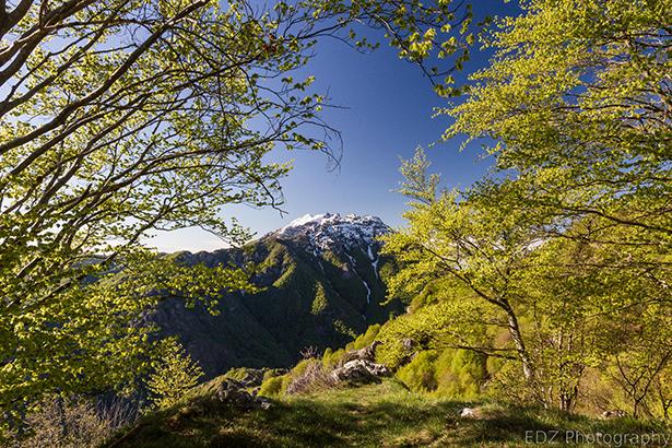 http500px.comphoto72065161natural-frame-by-emi-delli-zuani