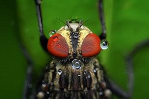 housefly-1130511_1920