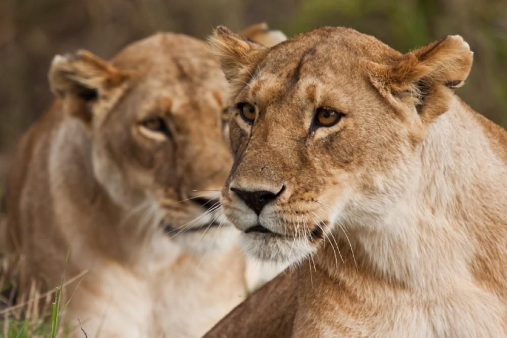 Safari-Guille-Ontiveros-3