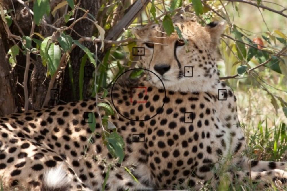 Safari-Guille-Ontiveros-4