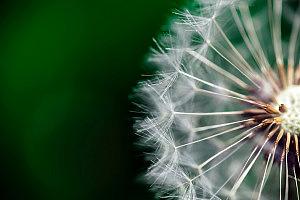 9 consejos para tu objetivo macro - mini