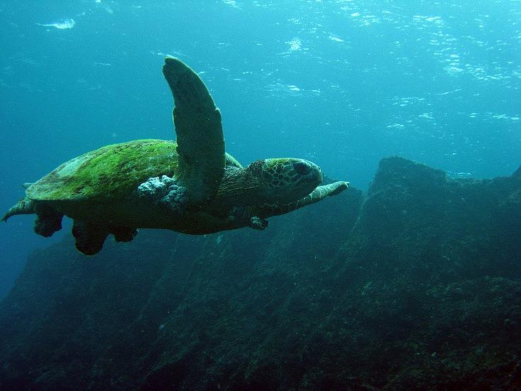 turtle-823258_1280