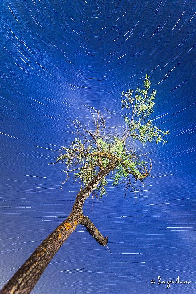 Mismo encuadre con distintos parámetros. Fotografía tomada con un 14mm a f/2.8, 2117 segundos a ISO 100. En esta ocasión, el árbol se ha iluminado con luz artificial.