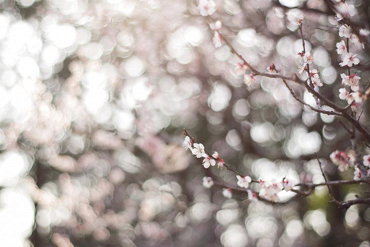 foto por けんたま/KENTAMA (licencia CC)