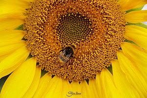 5 consejos para fotografiar flores en primavera