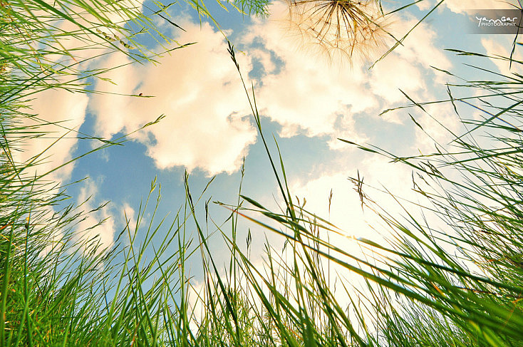foto por Yann Gar (licencia CC)
