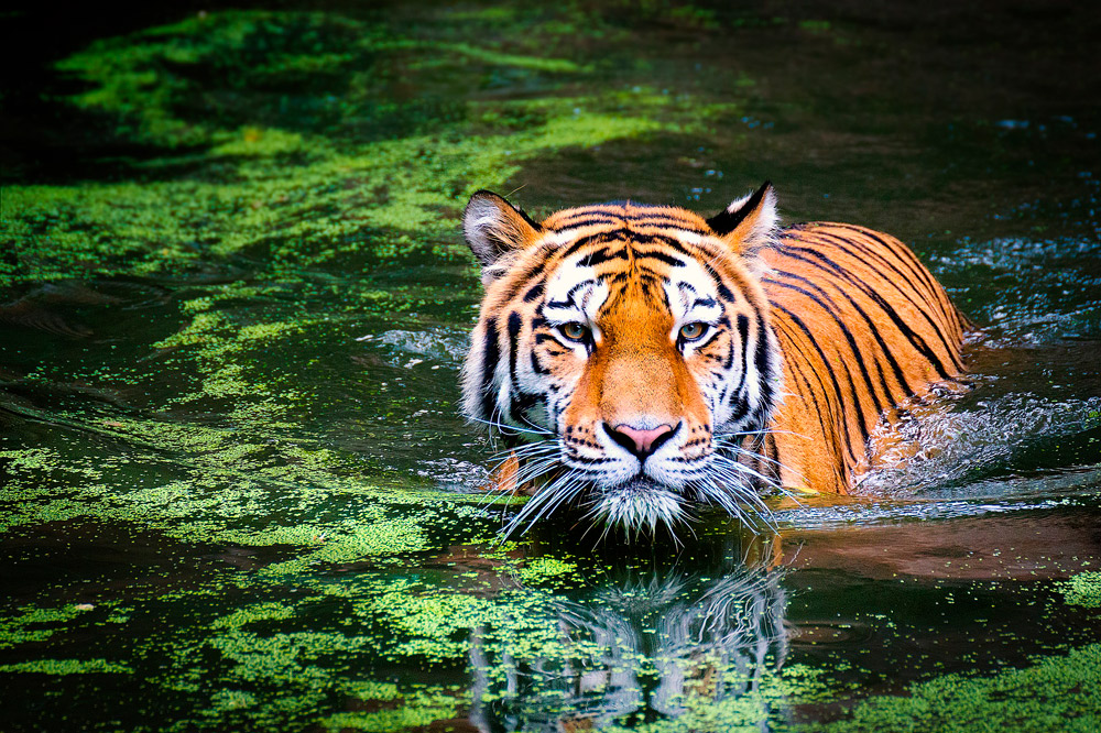 10 Consejos Para Conseguir Fotos Memorables En Tu Próxima Visita Al Zoo
