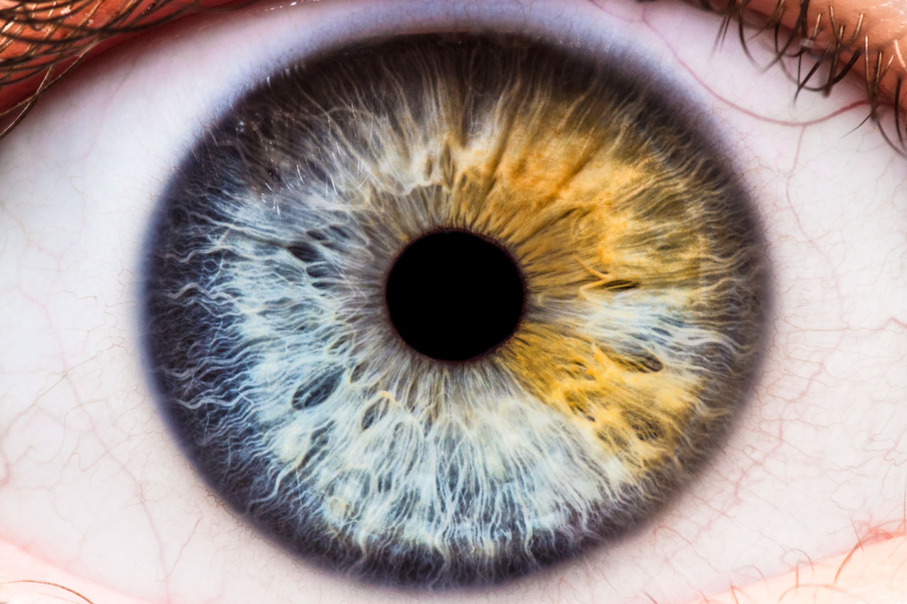 Cómo Fotografiar Los Ojos De Una Persona Desde Muy Cerca