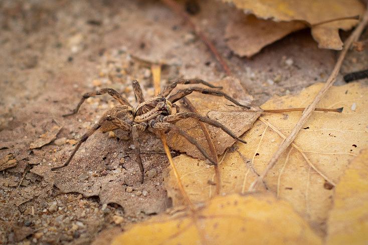 Otoño - Araña sobre hojas
