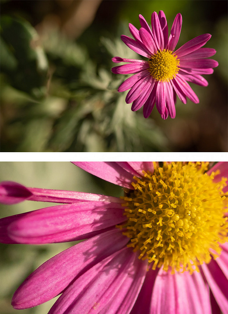 Imagen a f/1.7 - Extraordinaria nitidez